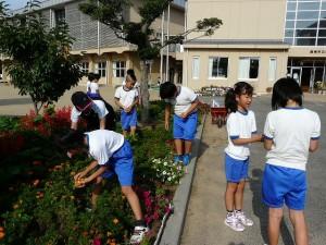 朝の奉仕活動 4年生 花壇の花摘みをしました。\\