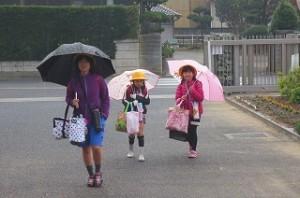 朝,傘の花が咲きました。\