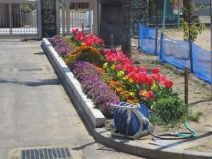 陽の光に誘われてチューリップの花びらが大きく開きました。\