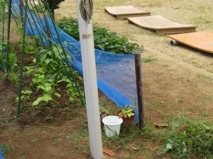 今日の朝の奉仕活動は,4・5年生で畑がきれいになりました。\\