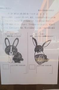 うさぎの名前募集「シャープリーとリボン」と飼育委員会から提案されましたが,投票で果たしてどんな名前になるか。楽しみです!\