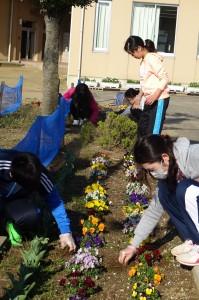 1~6年生を「水」「木」「金」の3つに分けて取り組んできました。みんなの力を合わせたのでいつもきれいな花壇でした。\