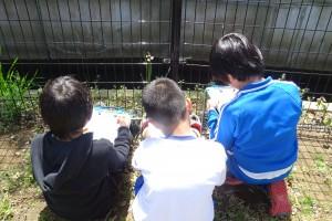 4年生は植物の観察をしました。\